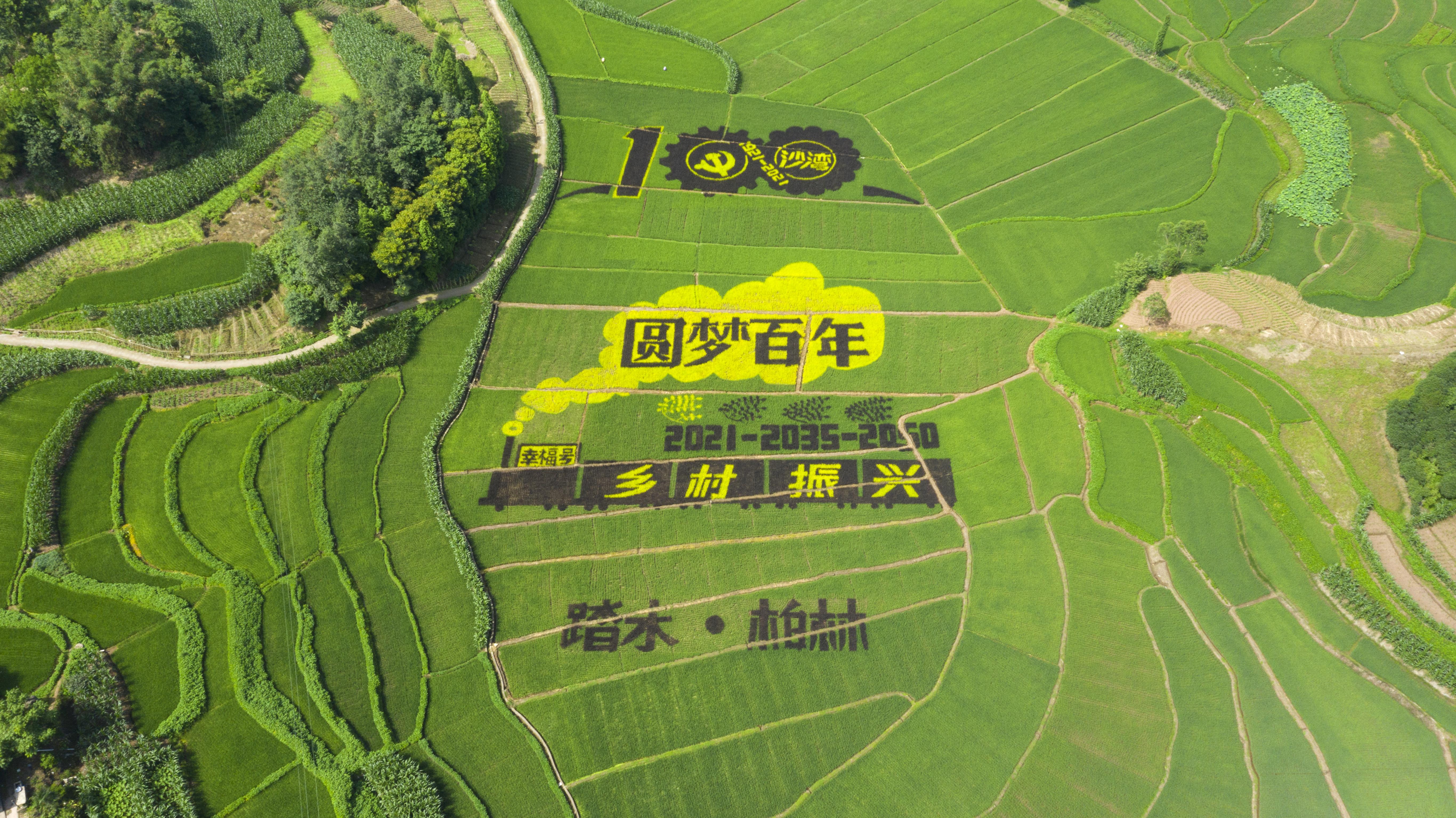 慶祝建黨百年,這個巨型稻田藝術畫作走紅網絡!